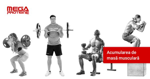 Acumularea de masa musculara